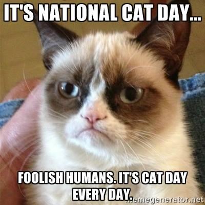 Its National Cat Day Foolish Humans. Its Cat Day Every Day it's national cat day foolish humans it's cat day every day