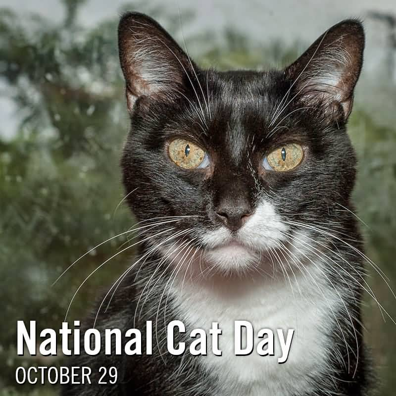 national cat day - photo #3