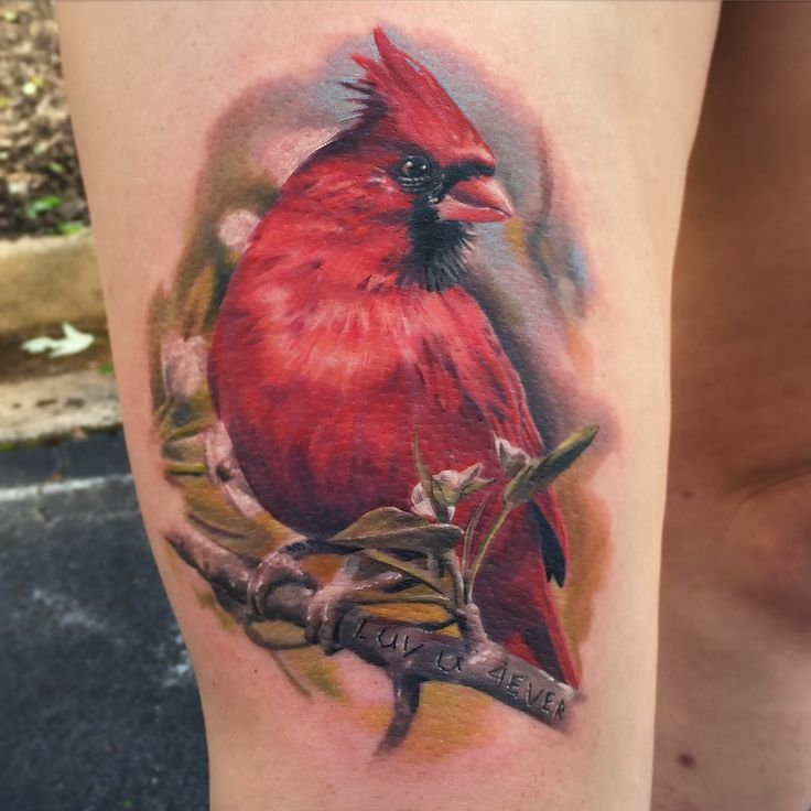 20+ Cute Cardinal Tattoos Ideas