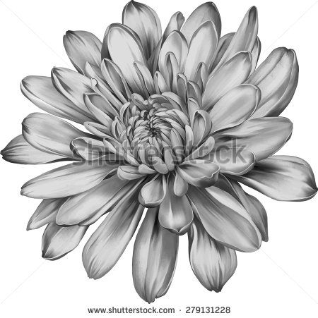 20 Awesome Chrysanthemum Tattoo Designs