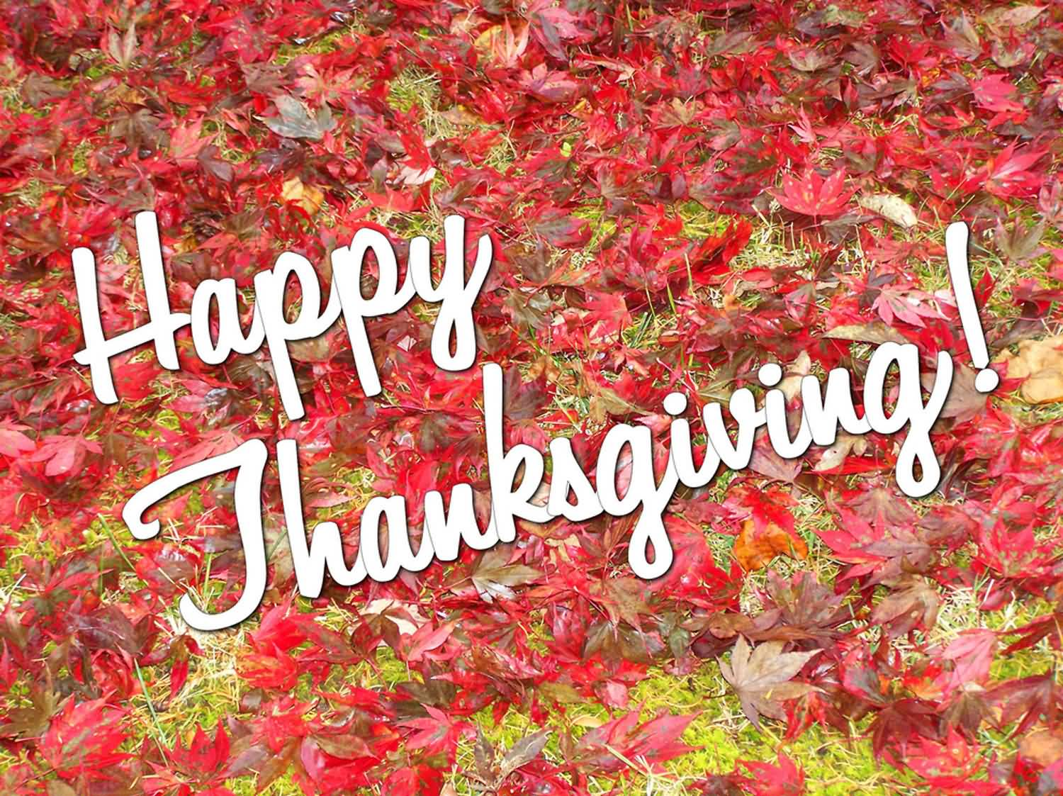 55 latest happy thanksgiving day 2016 greeting pictures and images happy thanksgiving 2016 wishes picture m4hsunfo