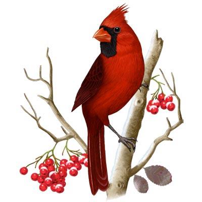 15+ Latest Cardinal Tattoo Designs