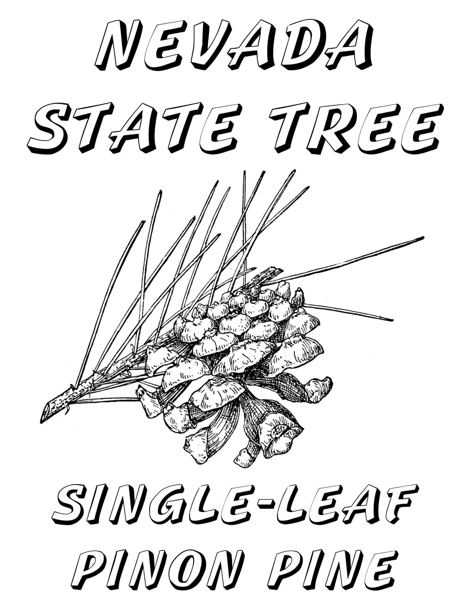 Florida state tree coloring page coloring pages for Nevada state flag coloring page