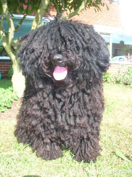 Black Mop Dog Snow