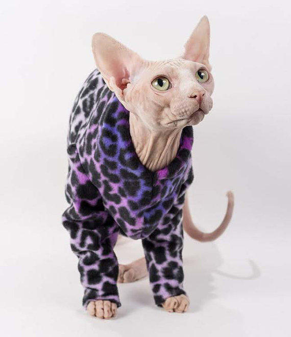 Sphynx Cat For Sale Wisconsin