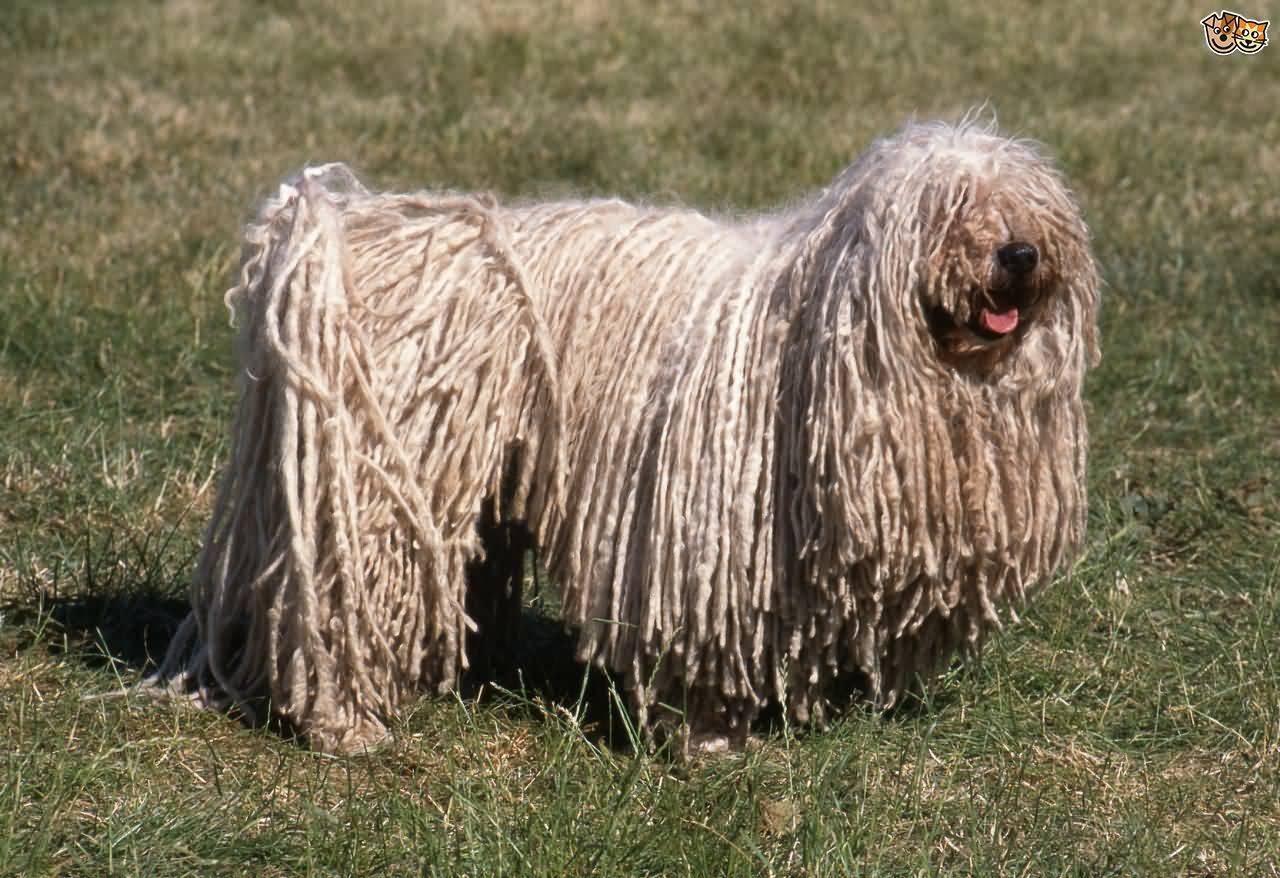 What Dog Breeds Matted Hair
