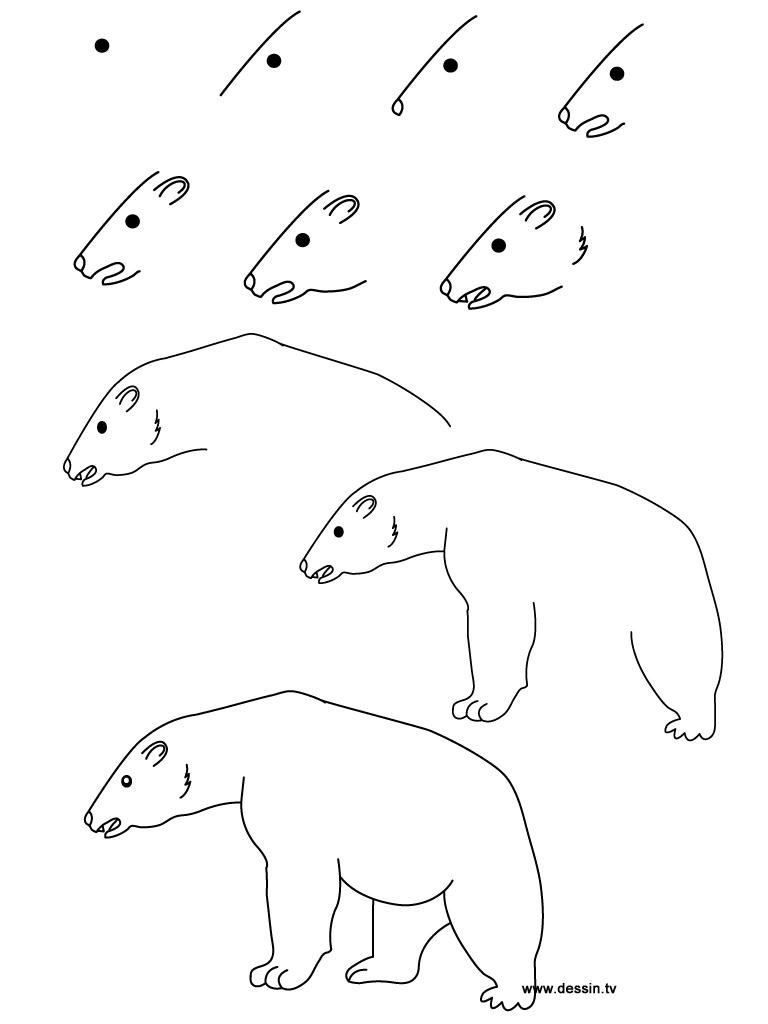 Drawing Lines With Polar Tracking : Outline polar bear tattoos