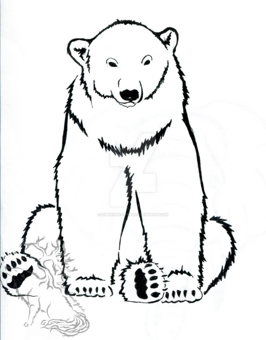 sitting polar bear drawing