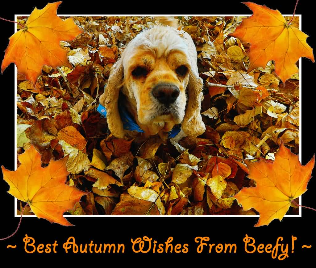 Best Autumn Wishes From Beefy Puppy With Fallen Leaves Picture