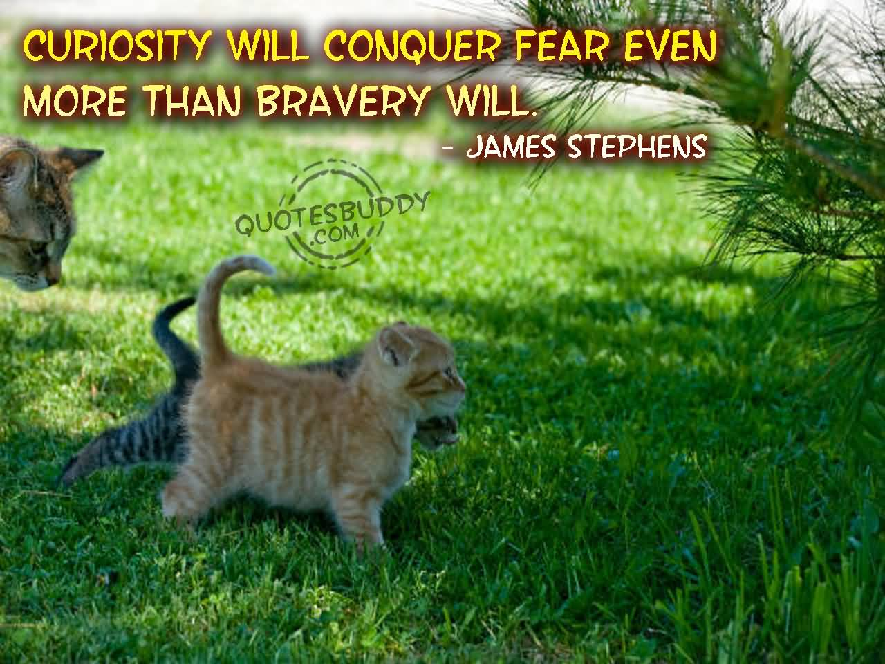 Curiosity Quotes Curiosity Will Conquer Fear Even More Than Bravery Will.