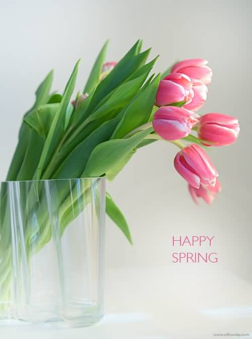 cute tulips pink flowers - photo #22
