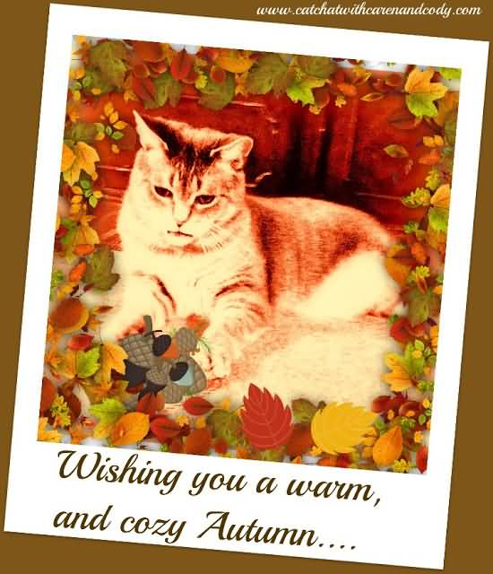 Wishing You A Warm And Cozy Autumn Cat Picture On Greeting Card