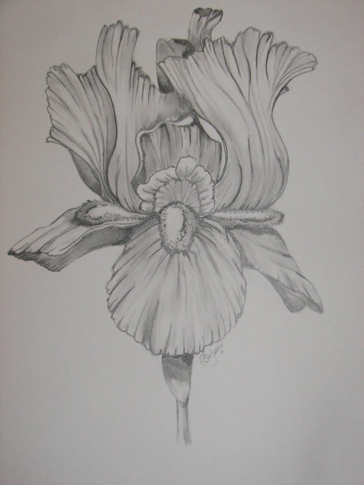 b73c4f149a96d Pretty Iris Black And White Tattoo Stencil