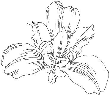 Simple Iris Flower Black And White Tattoo Design