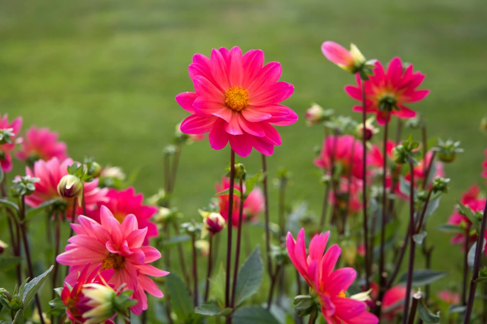 50 most beautiful flower pictures and photos adorable pink flowers field picture izmirmasajfo Image collections