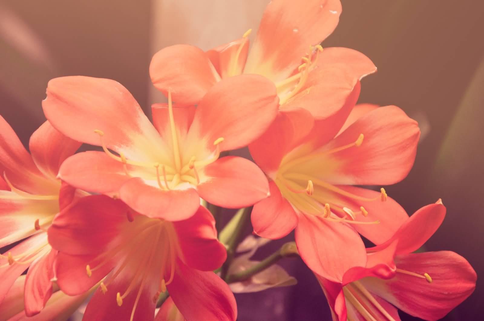 Beautiful Red Blooming Flowers