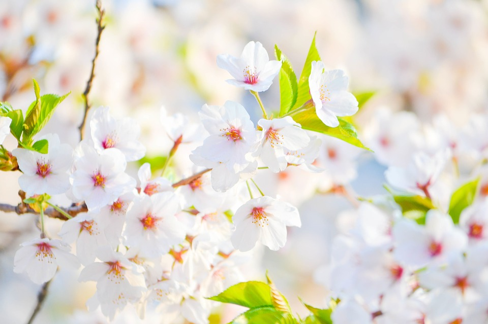 50 most beautiful flower pictures and photos cute white flowers picture mightylinksfo