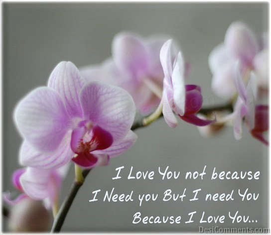 Love You Not Because I Need You But I Need You Because I Love You
