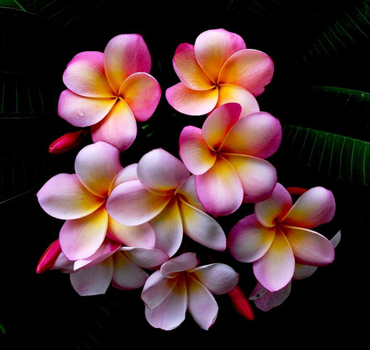 65 best flowers pictures and images pink yellow and white flowers picture mightylinksfo