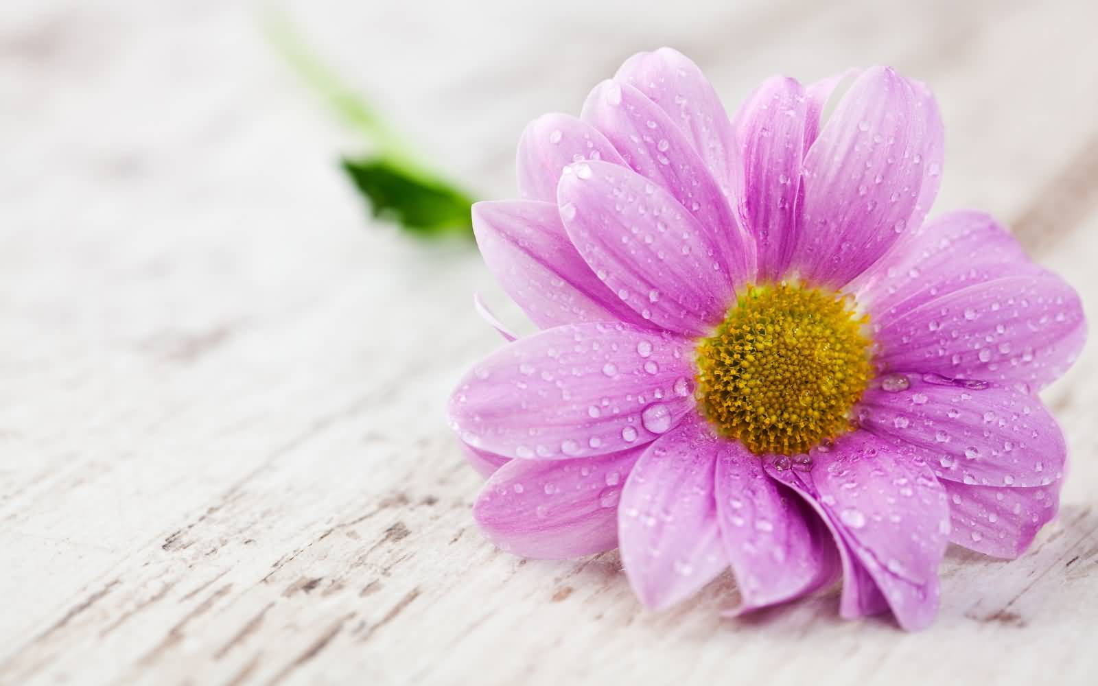 50 Most Beautiful Flower Pictures And Photos