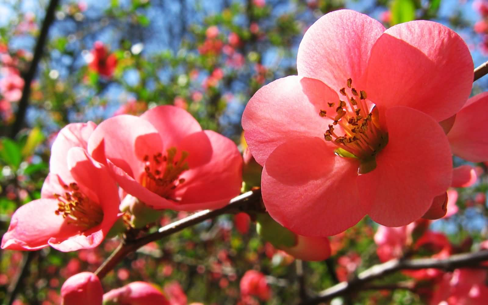 65 Best Flowers Pictures And Images