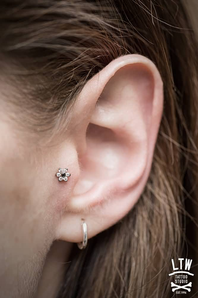 Lobe Piercing With Silver Round Ring And Tragus Piercing
