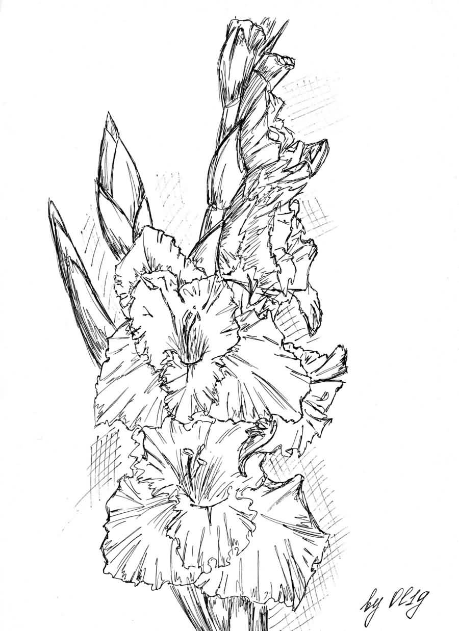 fa43fcddc Awesome Gladiolus Flowers Tattoo Sketch