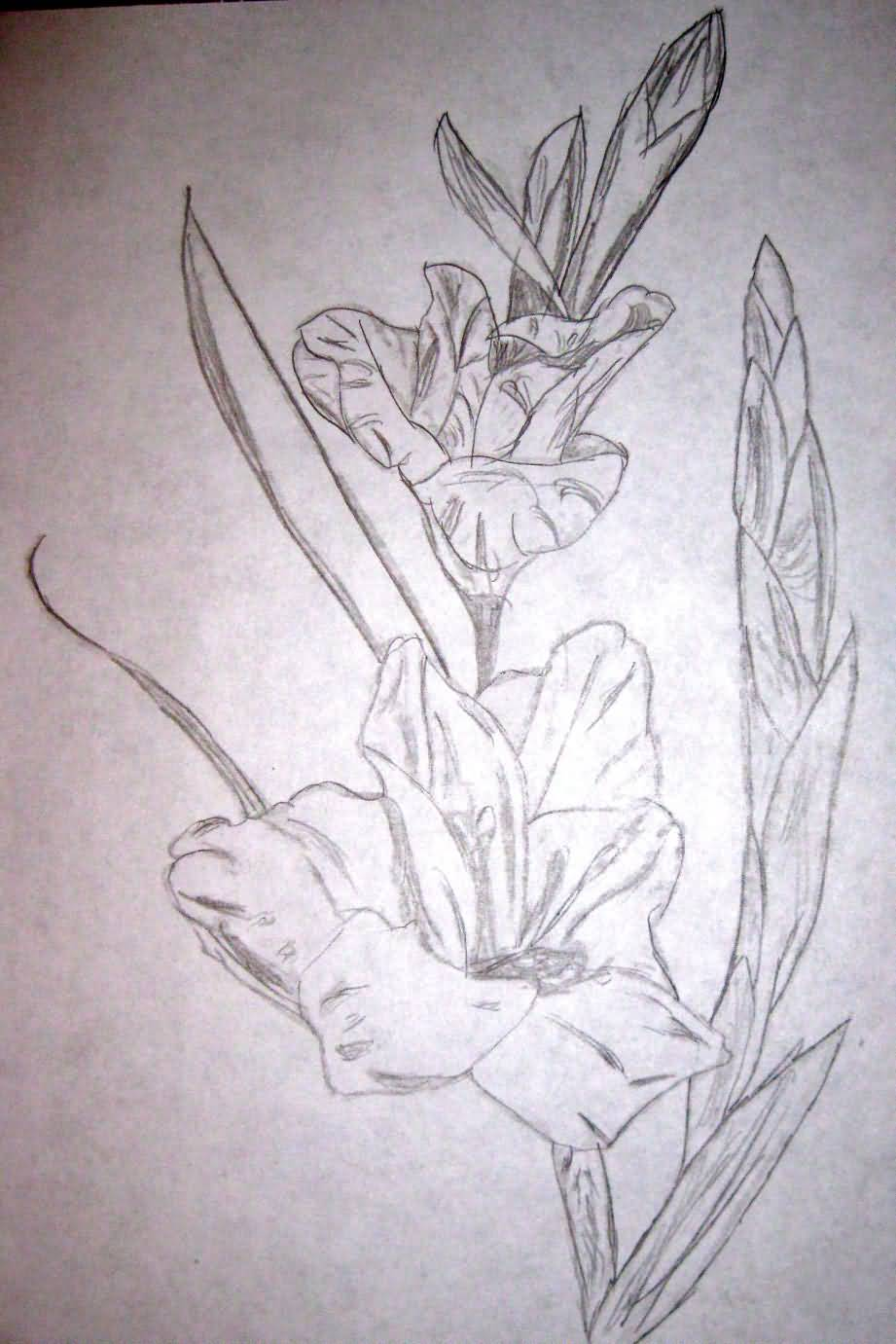 8b47d8420 Simple Gladiolus Flowers Tattoo Drawing