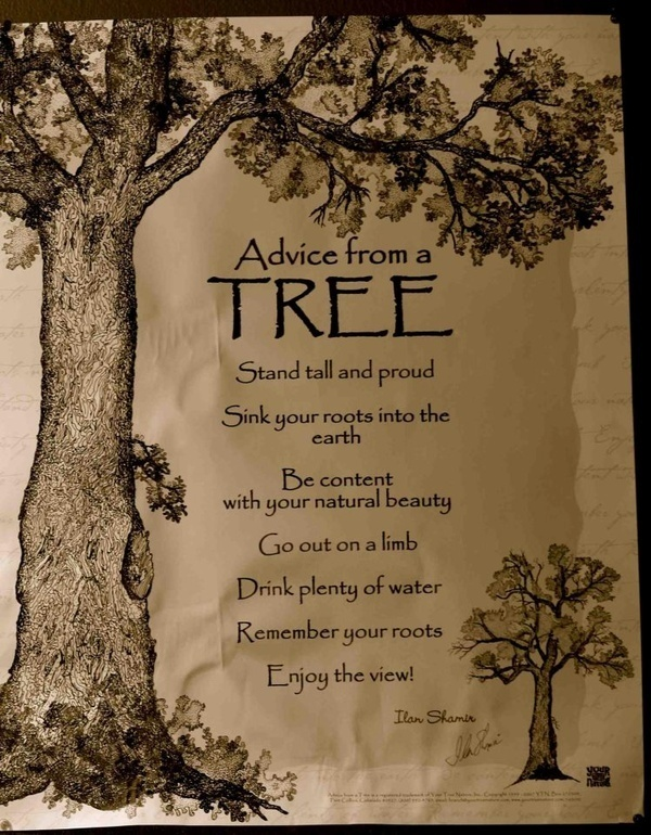 60 Best Tree Quotes Sayings