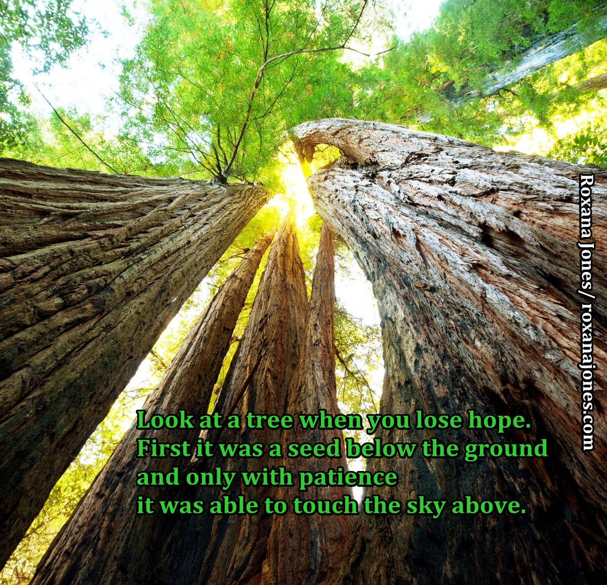 Quotes About Planting Seeds For Life 60 Best Tree Quotes & Sayings