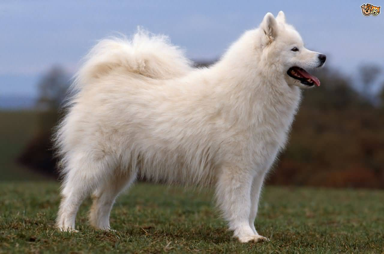 Top Tails Dog Walking