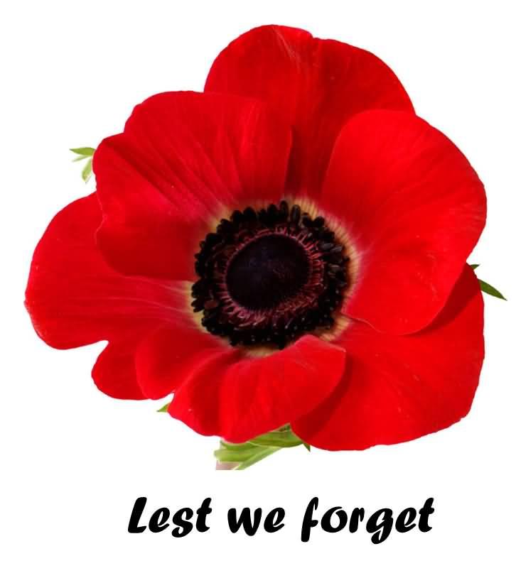 Lest-We-Forget-Poppy-Flower-Remembrance-Day.jpg