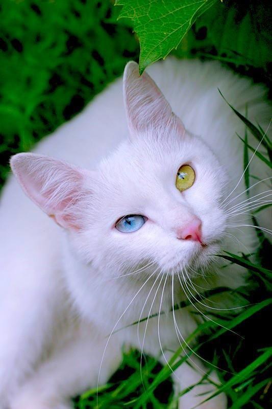 cartoon cat pictures