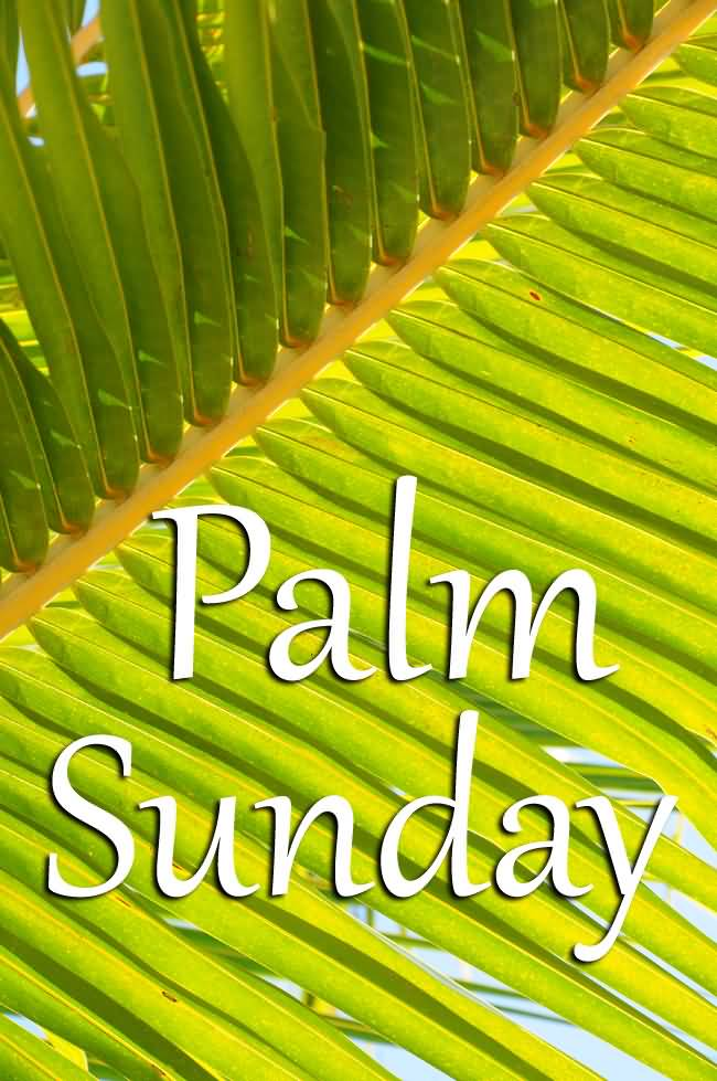 20+ Happy Palm Sunday Wish Pictures