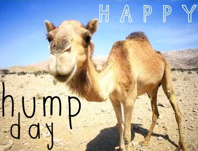 happy hump day picture