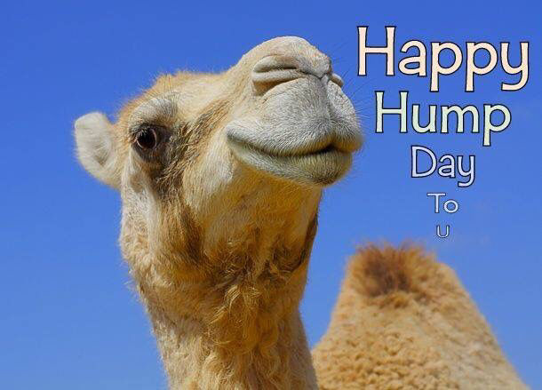 Happy Hump Day To You