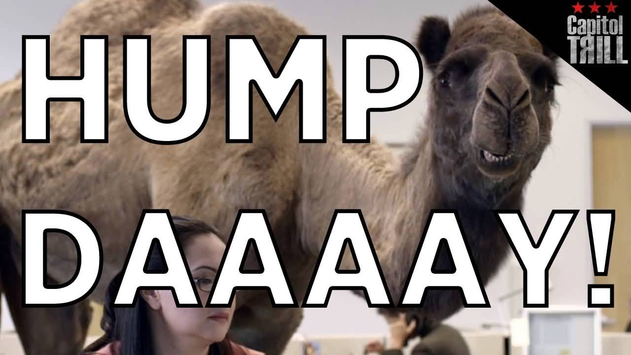 Hump Day Wishes