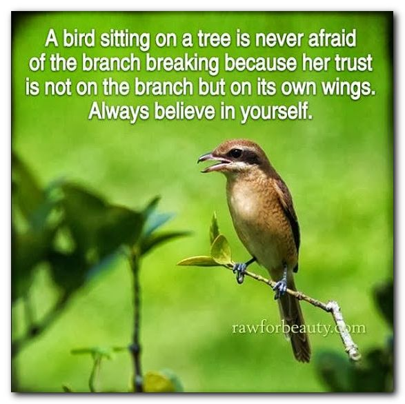 A bird sitting on a tree is never afraid of the branch breaking, because her trust is not on the branch but on it's wings. Always believe in yourself