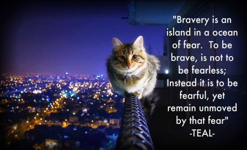 Etonnant Bravery Is An Island In A Ocean Of Fear. To Be Brave, Is Not