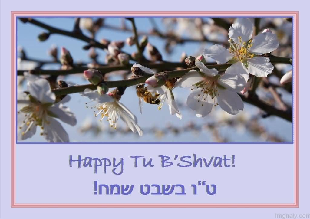 Image result for tu b'shevat sameach