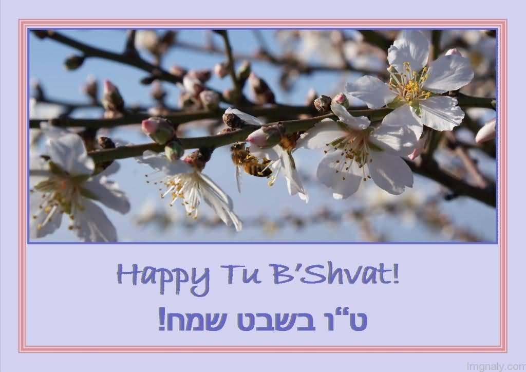 Image result for tu b'shevat sameach