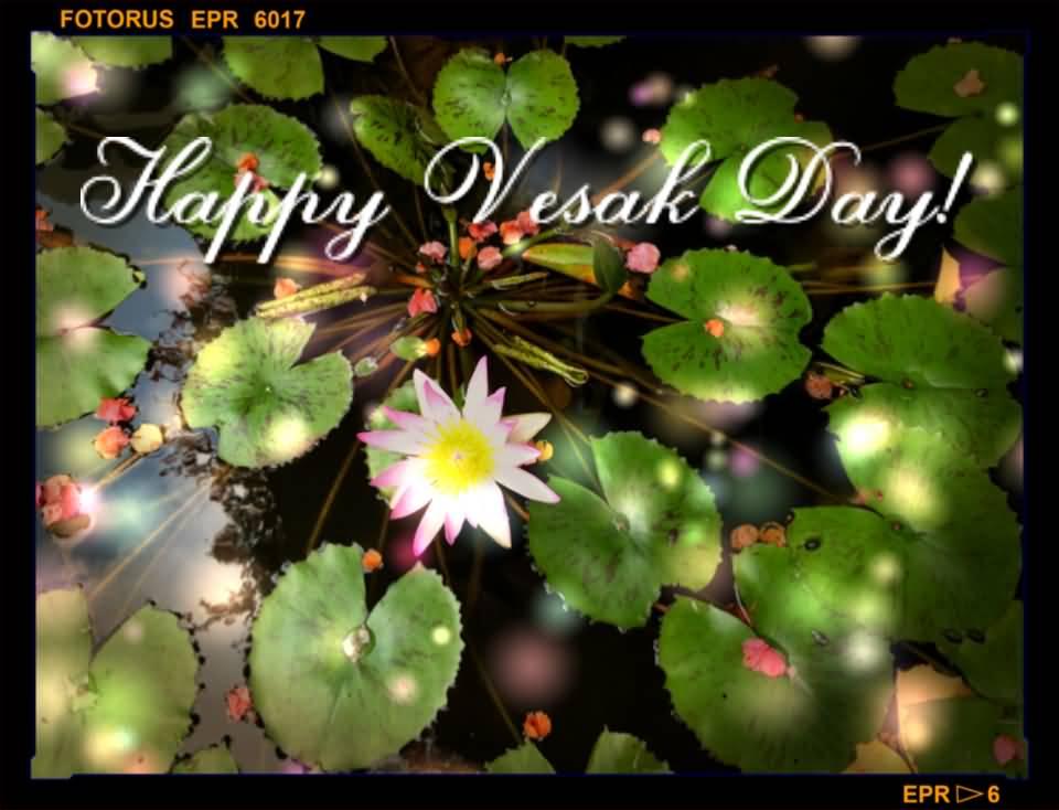 60 Vesak Greeting Pictures And Photos