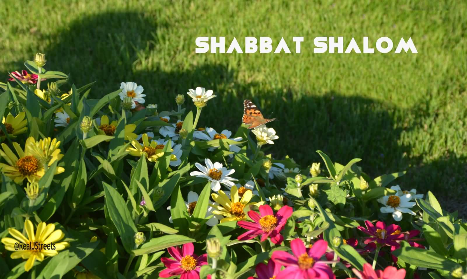 50 beautiful shabbat shalom greeting pictures and photos shabbat shalom greetings flowers picture kristyandbryce Image collections