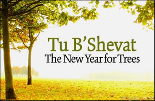 Image result for tu b'shevat images