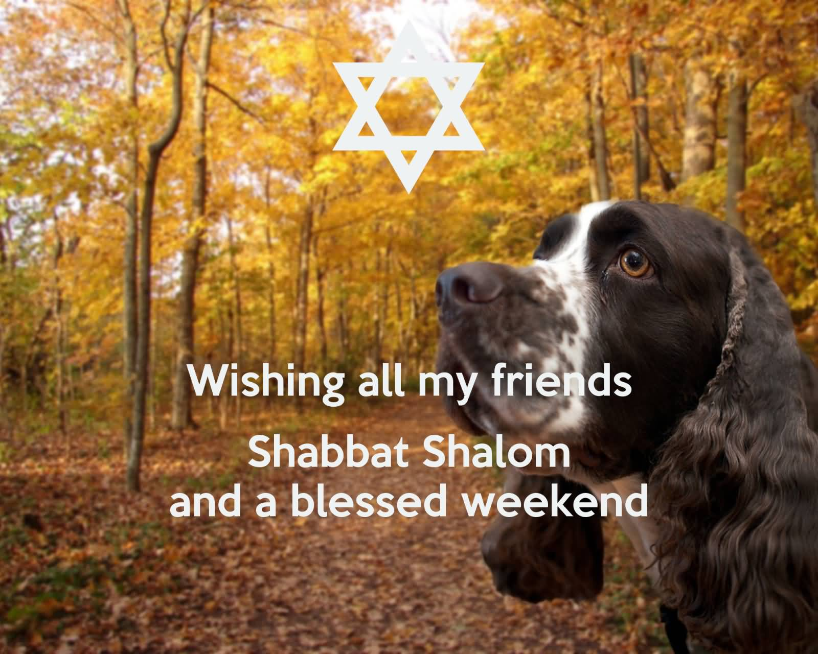 60 shabbat shalom greeting pictures wishing all my friends shabbat shalom and a blessed weekend dog picture kristyandbryce Image collections