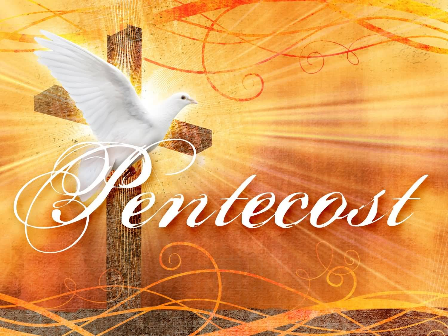 Image result for images of pentecost dove