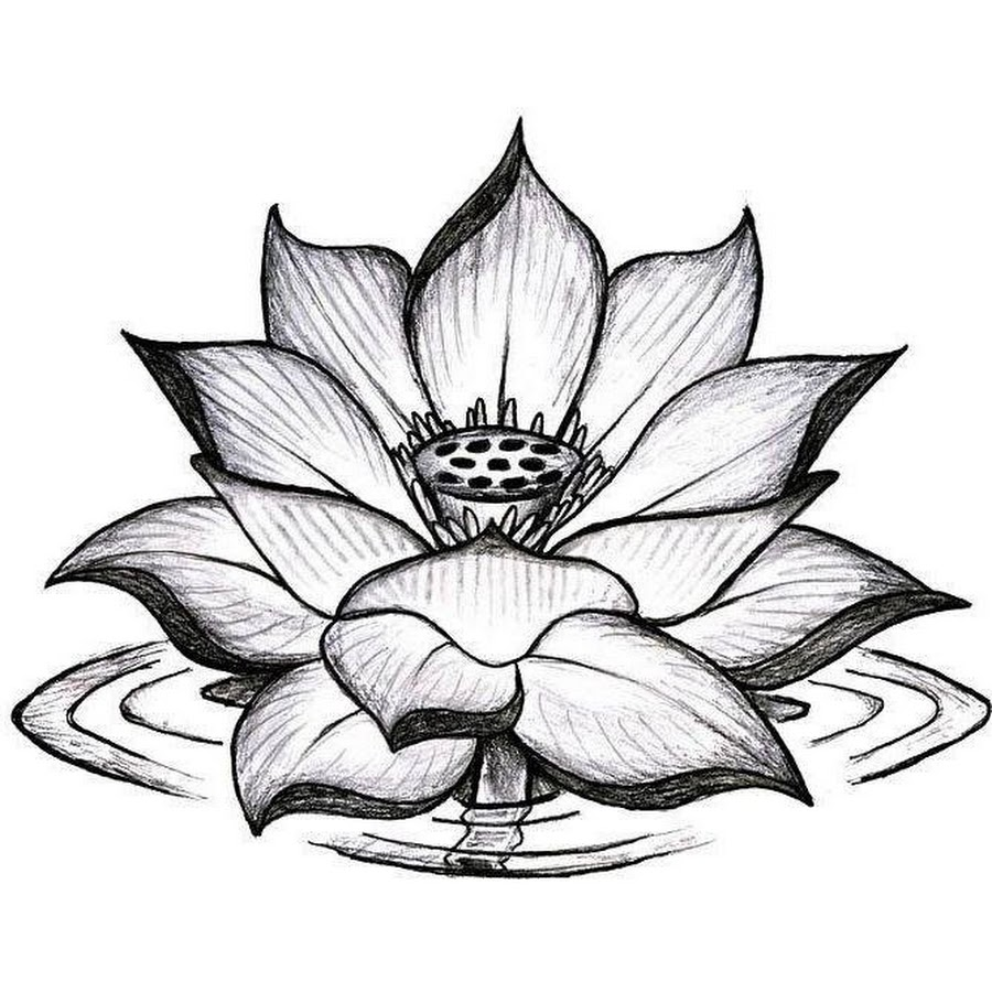 18 latest lotus tattoos designs askideas black and grey lotus flower tattoo design mightylinksfo Gallery