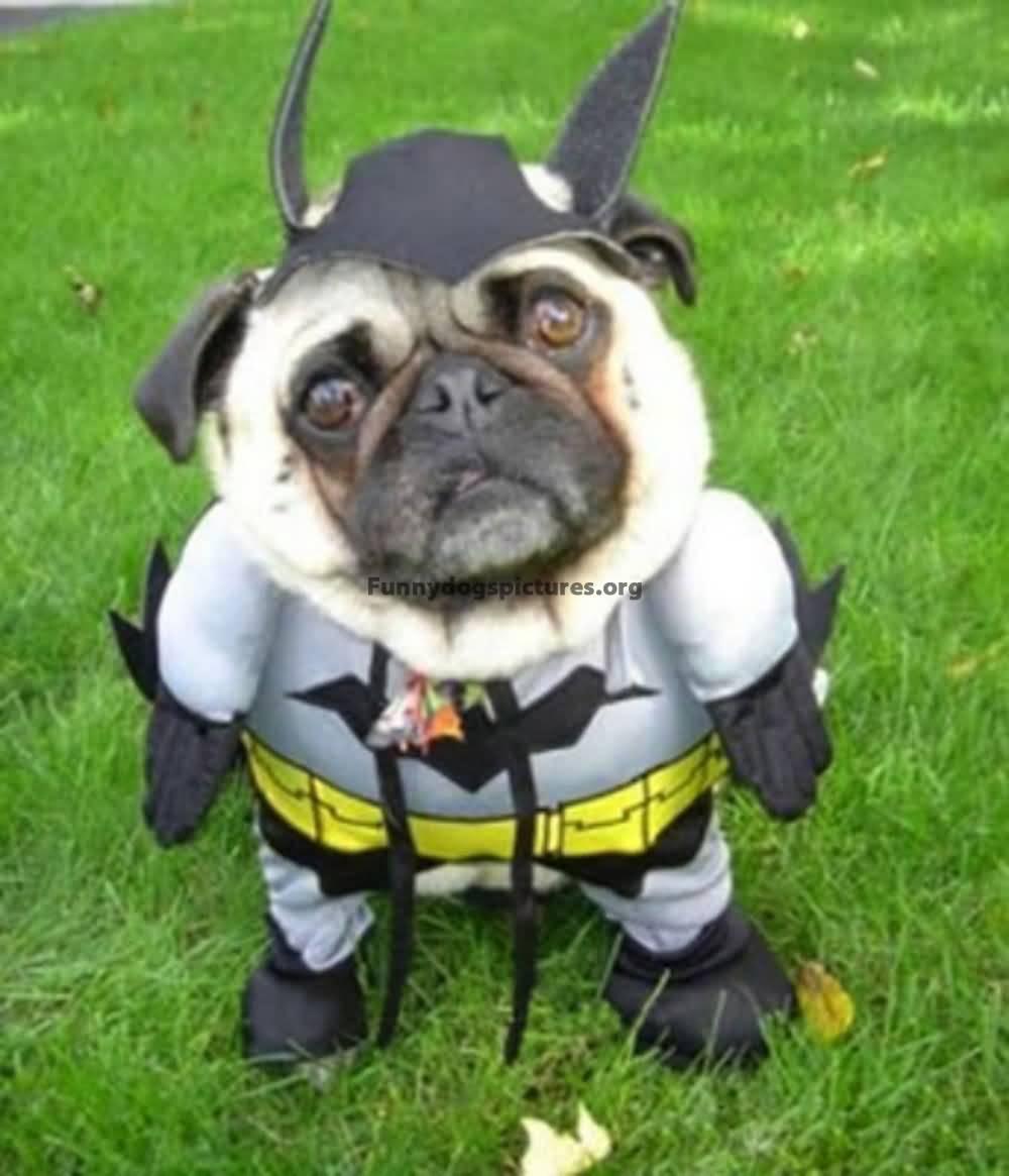 & Batman Funny Pet Costume