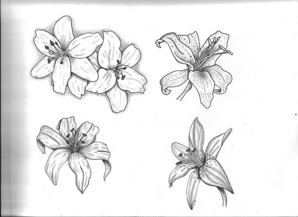 59 Black And Grey Lily Tattoos Collection