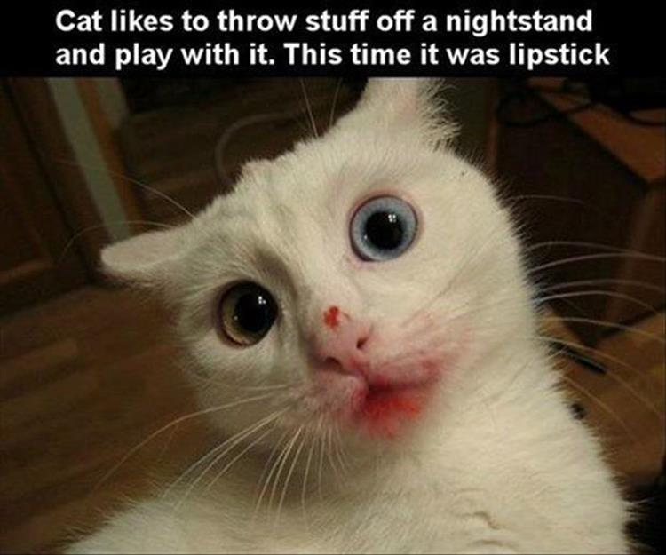 Cat Likes To Throw Stuff Off A Nighstand And Play With It. This Time It Was Lipstick Funny Cat Face Picture 50 most funny animal pictures and images